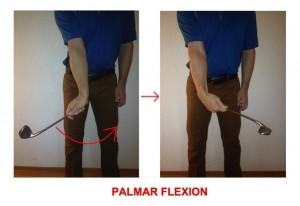 Palmar Flexion