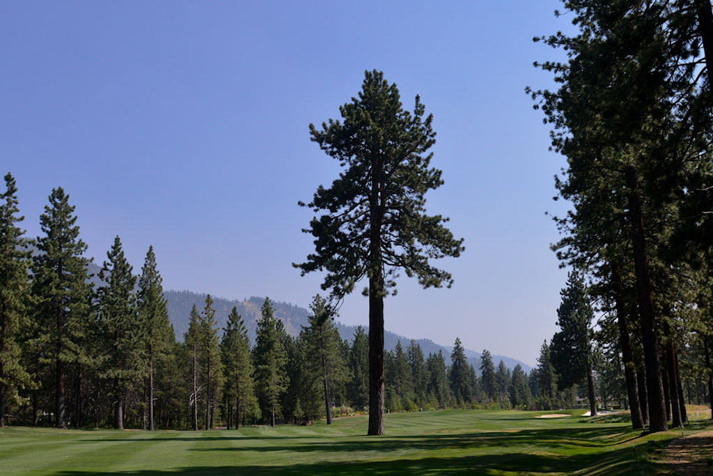 A massive, old-growth tree sits in the middle of the fairway landing zone on hole No. 8. A massive, old-growth tree sits in the middle of the fairway landing zone on hole No. 8.