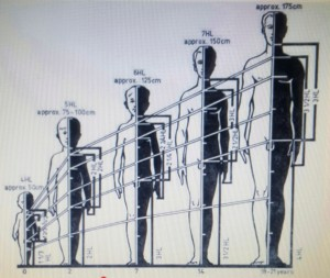 Body proportions (2)