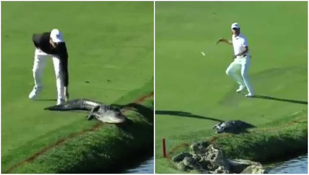 two completely different ways to deal with an alligator on