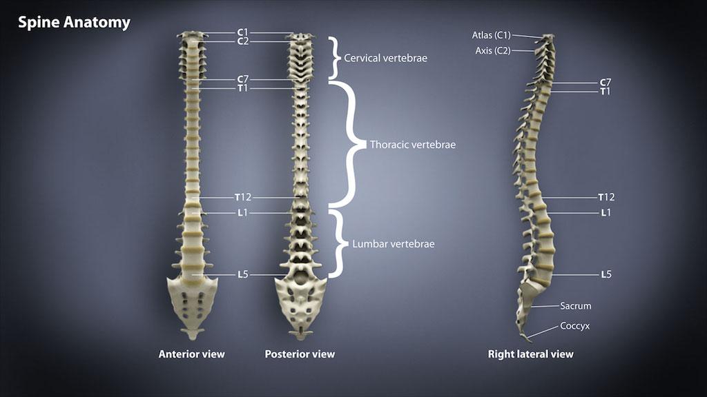 SpineAnatomyAtlas