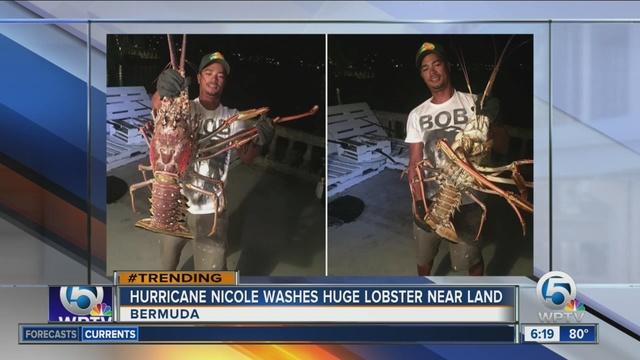 14_pound_lobster_caught_near_Bermuda_0_48217534_ver1.0_640_480