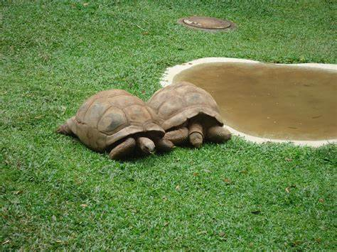turtles, slow, golf